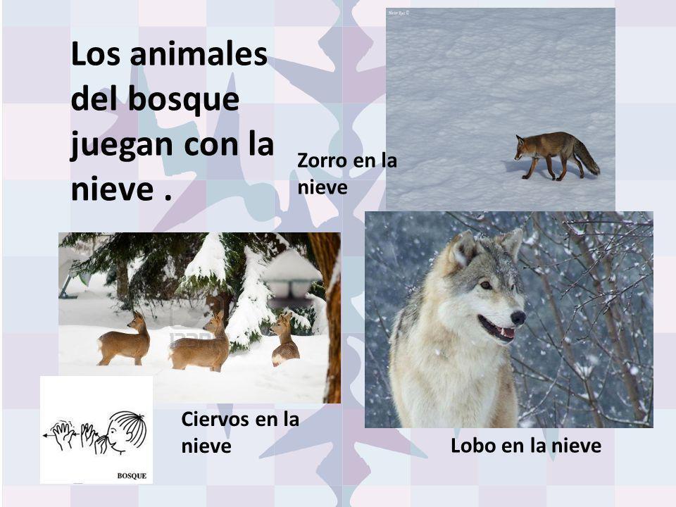 Los animales del bosque juegan con la nieve. Lobo en la nieve Zorro en la nieve Ciervos en la nieve