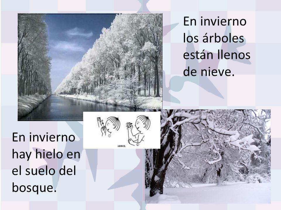 En invierno los árboles están llenos de nieve. En invierno hay hielo en el suelo del bosque.
