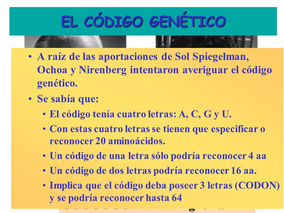 EL CÓDIGO GENÉTICO S. Ochoa: Poli A y M. Nirenberg: Poli U: Premio Nobel 1968 ¿Ambos? A raíz de las aportaciones de Sol Spiegelman, Ochoa y Nirenberg