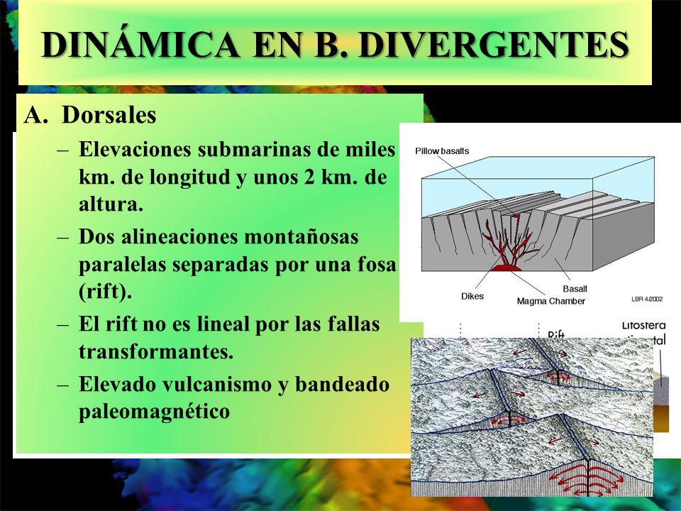 DINÁMICA EN B. DIVERGENTES A.Dorsales –Elevaciones submarinas de miles km. de longitud y unos 2 km. de altura. –Dos alineaciones montañosas paralelas
