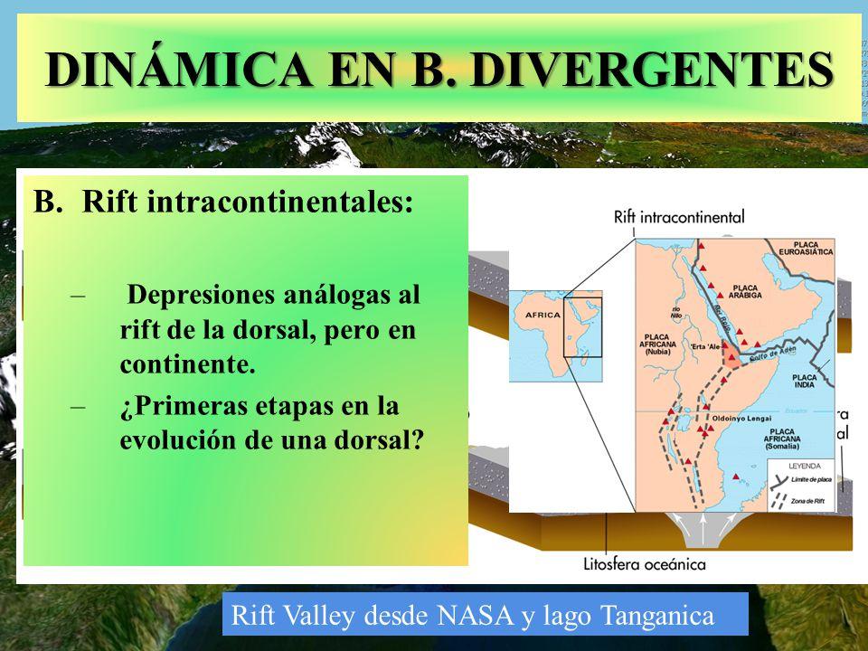 Rift Valley desde NASA y lago Tanganica DINÁMICA EN B. DIVERGENTES B.Rift intracontinentales: – Depresiones análogas al rift de la dorsal, pero en con