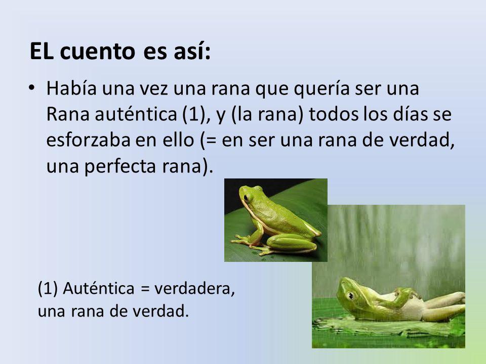Al principio (la rana) se compró un espejo en el que se miraba largamente (1) buscando su ansiada (2) autenticidad (3)(= la rana quería verse a sí misma como una perfecta rana, como una rana verdadera).