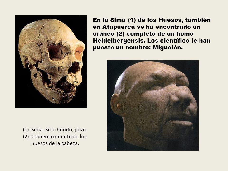 En la Sima (1) de los Huesos, también en Atapuerca se ha encontrado un cráneo (2) completo de un homo Heidelbergensis. Los científico le han puesto un