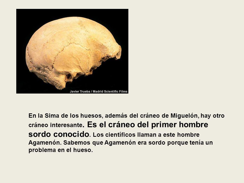 En la Sima de los huesos, además del cráneo de Miguelón, hay otro cráneo interesante. Es el cráneo del primer hombre sordo conocido. Los científicos l
