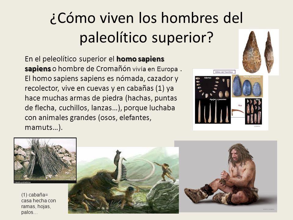 ¿Cómo viven los hombres del paleolítico superior? homo sapiens sapiens En el peleolítico superior el homo sapiens sapiens o hombre de Cromañón vivía e