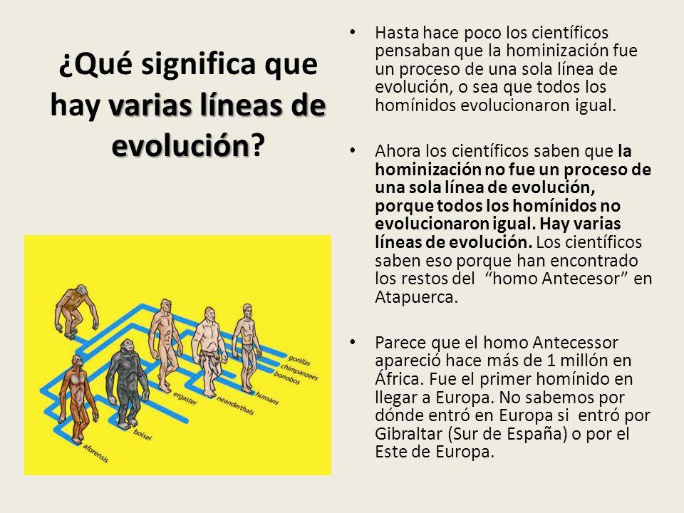 varias líneas de evolución ¿Qué significa que hay varias líneas de evolución? Hasta hace poco los científicos pensaban que la hominización fue un proc