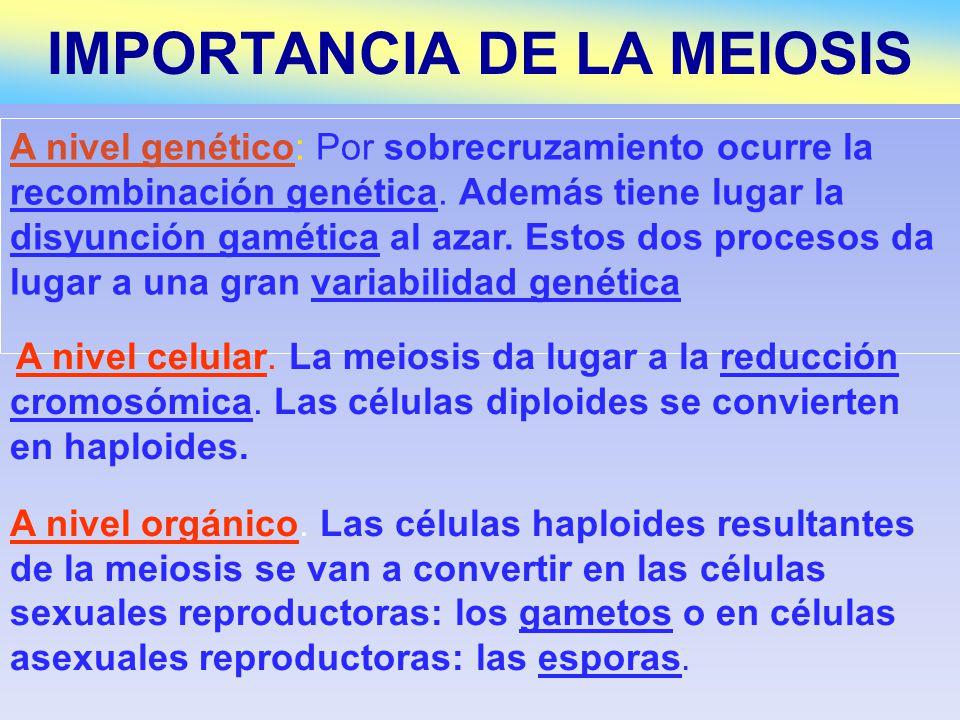 MITOSIS Ocurre en células diploides y haploides Sólo es una división Ocurre en la línea somática Mantiene constante el número de cromosomas Se obtienen dos células Seguridad Se separan cromátidas hermanas en la Anafase No hay tétradas MEIOSIS Ocurre sólo en células diploides (MEIOCITOS) Son dos divisiones Ocurre en la línea germinal Reduce a la mitad el número de cromosomas Se obtienen 4 células Variabilidad Se separan cromosomas homólogos en la Anafase I Tétradas o bivalentes 19.9.- COMPARACIÓN DE MITOSIS Y MEIOSIS