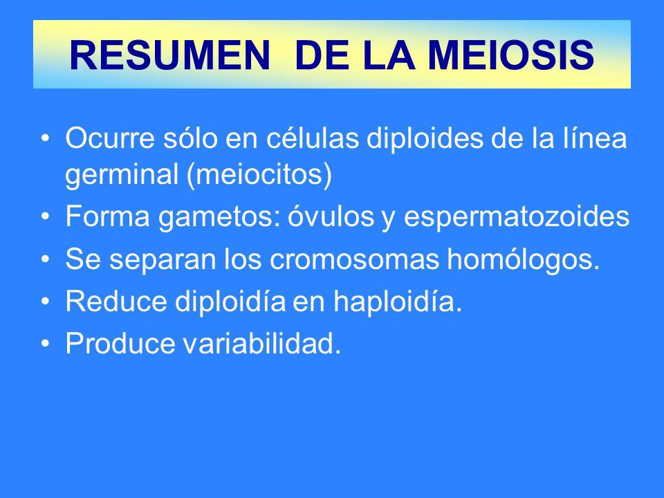 Ocurre sólo en células diploides de la línea germinal (meiocitos) Forma gametos: óvulos y espermatozoides Se separan los cromosomas homólogos.
