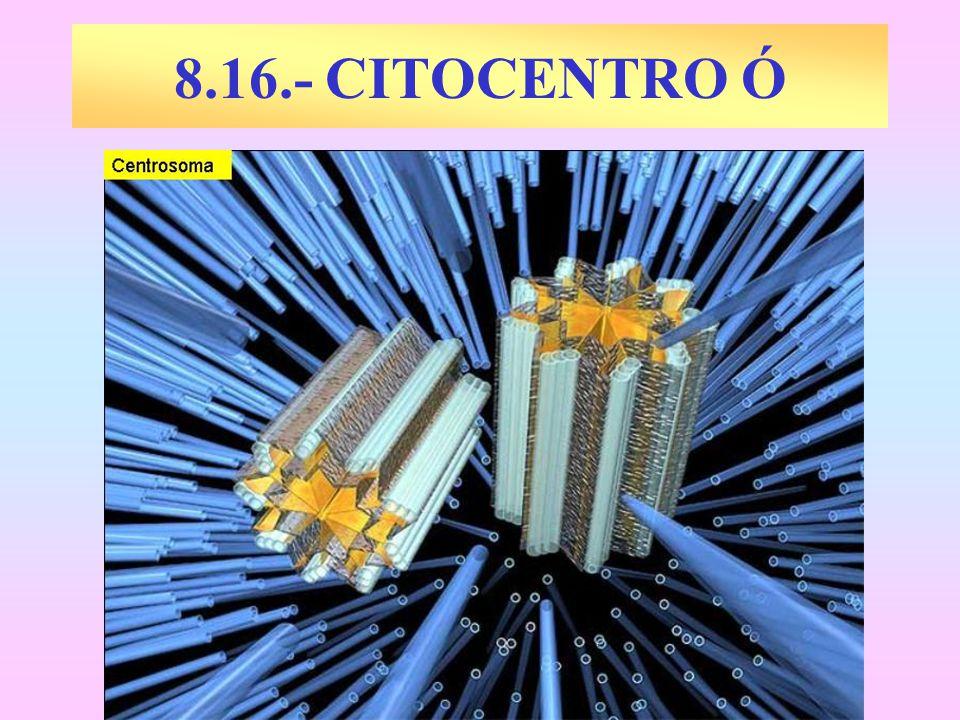 CITOCENTRO Ó CENTROSOMA Orgánulo citoplásmico sin membranas.
