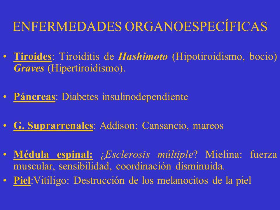 AUTOINMUNIDAD 0rganoespecíficasMultisistémicas Páncreas M. espinal G. suprarrenales Tiroides Lupus eritematosoArtritis reumatoide Piel