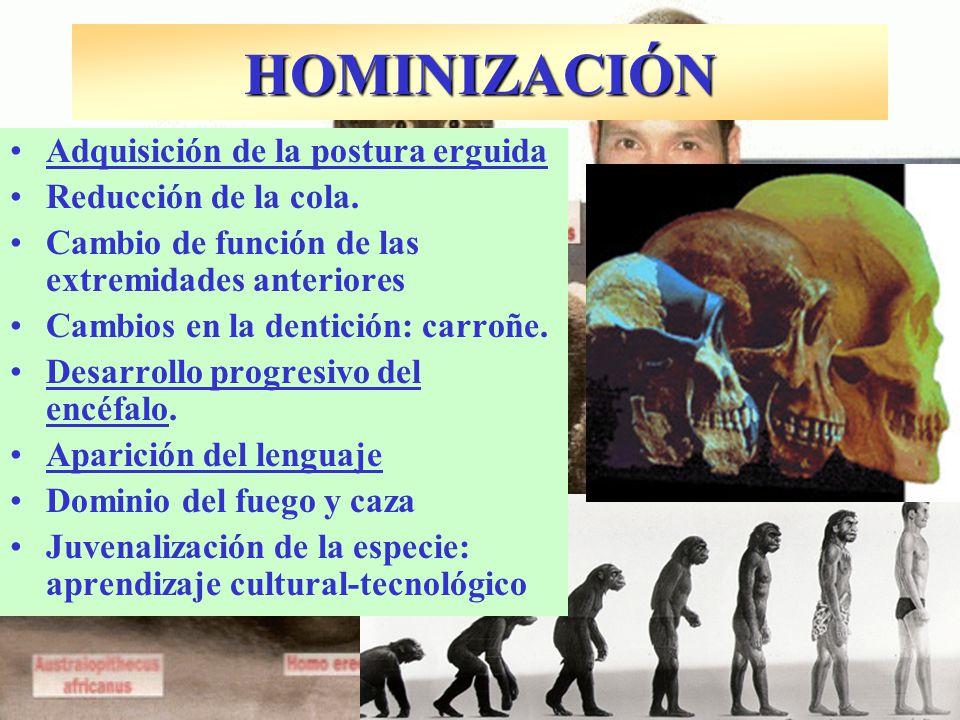 El ser humano también es fruto de un proceso evolutivo a partir de un origen común con el resto de criaturas.