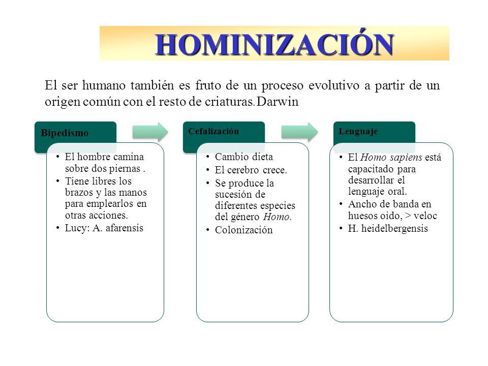 El ser humano también es fruto de un proceso evolutivo a partir de un origen común con el resto de criaturas. Darwin Bipedismo El hombre camina sobre