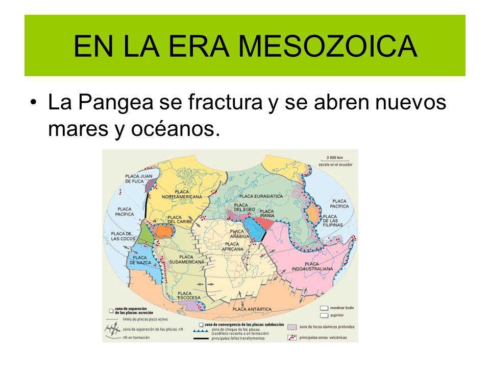 EN LA ERA MESOZOICA La Pangea se fractura y se abren nuevos mares y océanos.