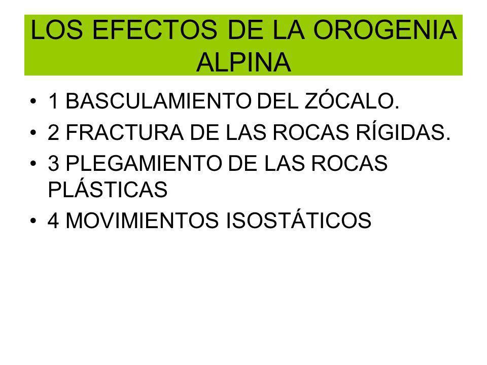 LOS EFECTOS DE LA OROGENIA ALPINA 1 BASCULAMIENTO DEL ZÓCALO. 2 FRACTURA DE LAS ROCAS RÍGIDAS. 3 PLEGAMIENTO DE LAS ROCAS PLÁSTICAS 4 MOVIMIENTOS ISOS