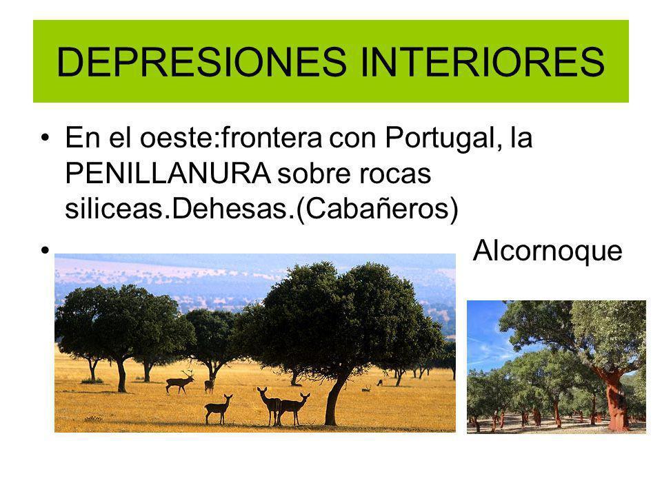 DEPRESIONES INTERIORES En el oeste:frontera con Portugal, la PENILLANURA sobre rocas siliceas.Dehesas.(Cabañeros) Alcornoque