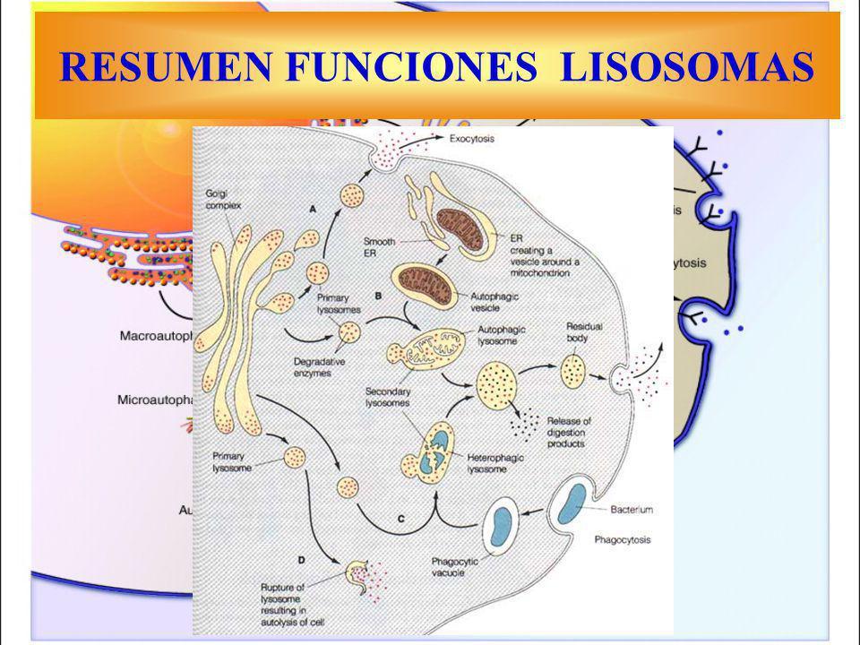 RESUMEN FUNCIONES LISOSOMAS