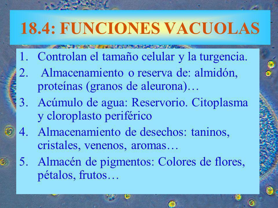 1.Controlan el tamaño celular y la turgencia. 2. Almacenamiento o reserva de: almidón, proteínas (granos de aleurona)… 3.Acúmulo de agua: Reservorio.