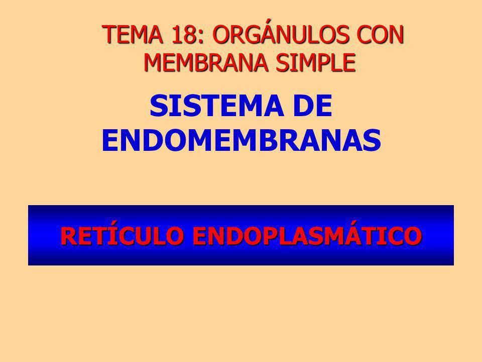 RETÍCULO ENDOPLASMÁTICO SISTEMA DE ENDOMEMBRANAS TEMA 18: ORGÁNULOS CON MEMBRANA SIMPLE TEMA 18: ORGÁNULOS CON MEMBRANA SIMPLE