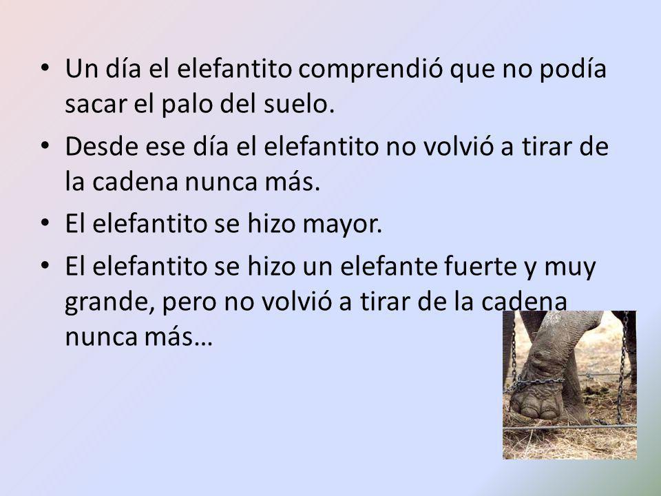 Un día el elefantito comprendió que no podía sacar el palo del suelo. Desde ese día el elefantito no volvió a tirar de la cadena nunca más. El elefant