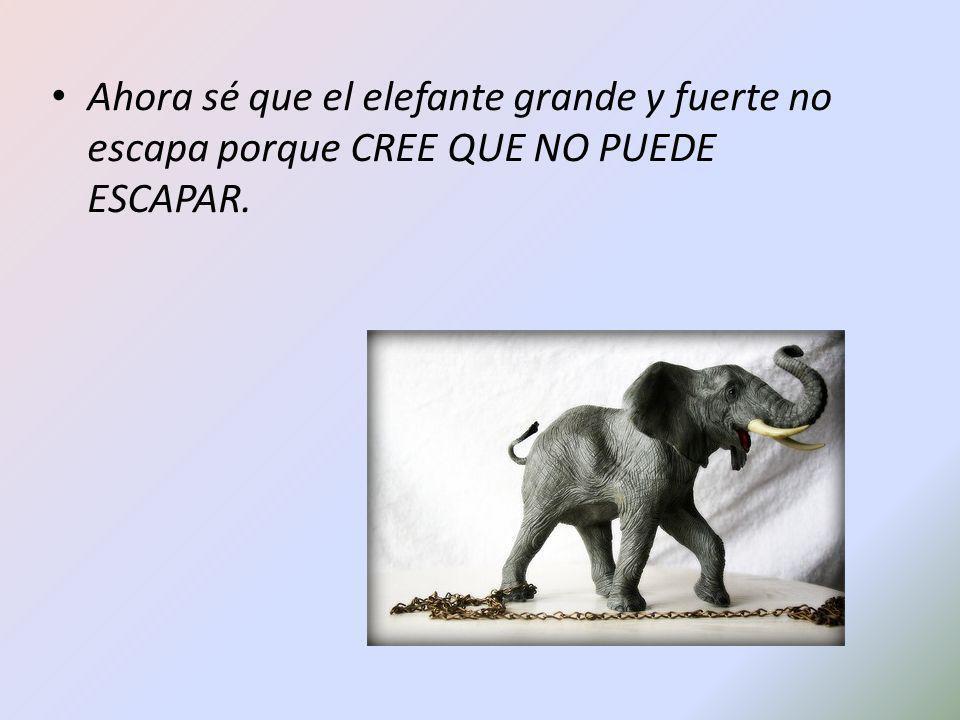 Ahora sé que el elefante grande y fuerte no escapa porque CREE QUE NO PUEDE ESCAPAR.