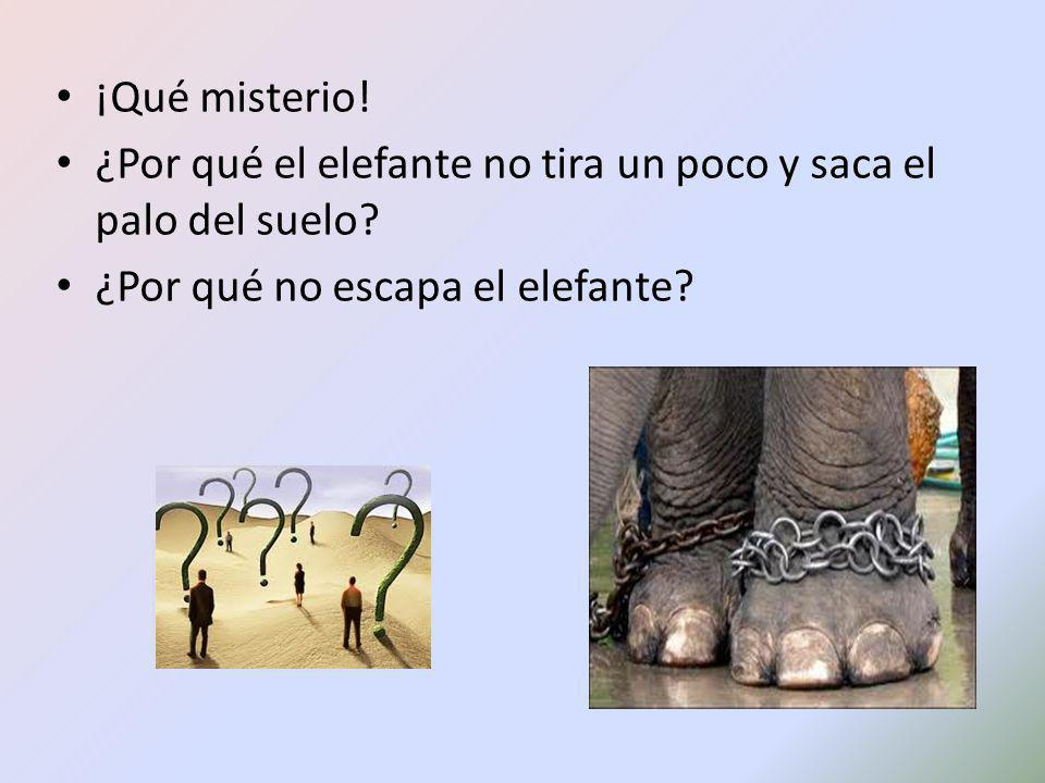 ¡Qué misterio! ¿Por qué el elefante no tira un poco y saca el palo del suelo? ¿Por qué no escapa el elefante?