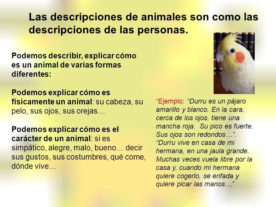Podemos describir, explicar cómo es un animal de varias formas diferentes: Podemos explicar cómo es físicamente un animal: su cabeza, su pelo, sus ojo