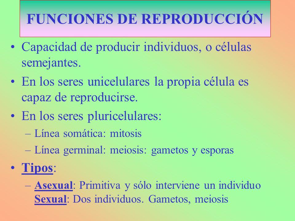 VENTAJAS E INCONVENIENTES EN LA REPRODUCCIÓN SEXUAL Y ASEXUAL ASEXUAL Mayor rapidez Más fácil.