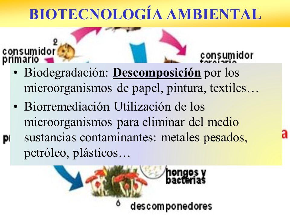 BIOTECNOLOGÍA AMBIENTAL Biodegradación: Descomposición por los microorganismos de papel, pintura, textiles… Biorremediación Utilización de los microorganismos para eliminar del medio sustancias contaminantes: metales pesados, petróleo, plásticos…