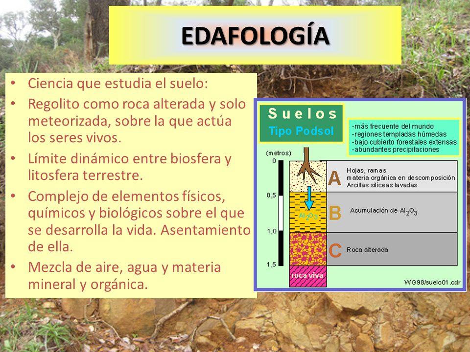 EDAFOLOGÍA Ciencia que estudia el suelo: Regolito como roca alterada y solo meteorizada, sobre la que actúa los seres vivos. Límite dinámico entre bio