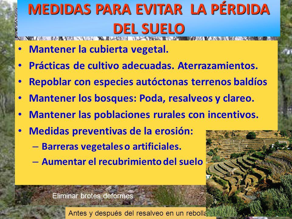 Antes y después del resalveo en un rebollar MEDIDAS PARA EVITAR LA PÉRDIDA DEL SUELO Mantener la cubierta vegetal. Prácticas de cultivo adecuadas. Ate
