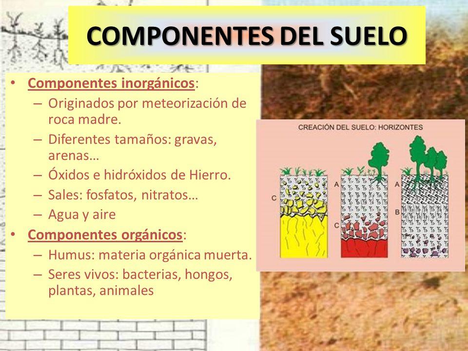 COMPONENTES DEL SUELO Componentes inorgánicos: – Originados por meteorización de roca madre. – Diferentes tamaños: gravas, arenas… – Óxidos e hidróxid
