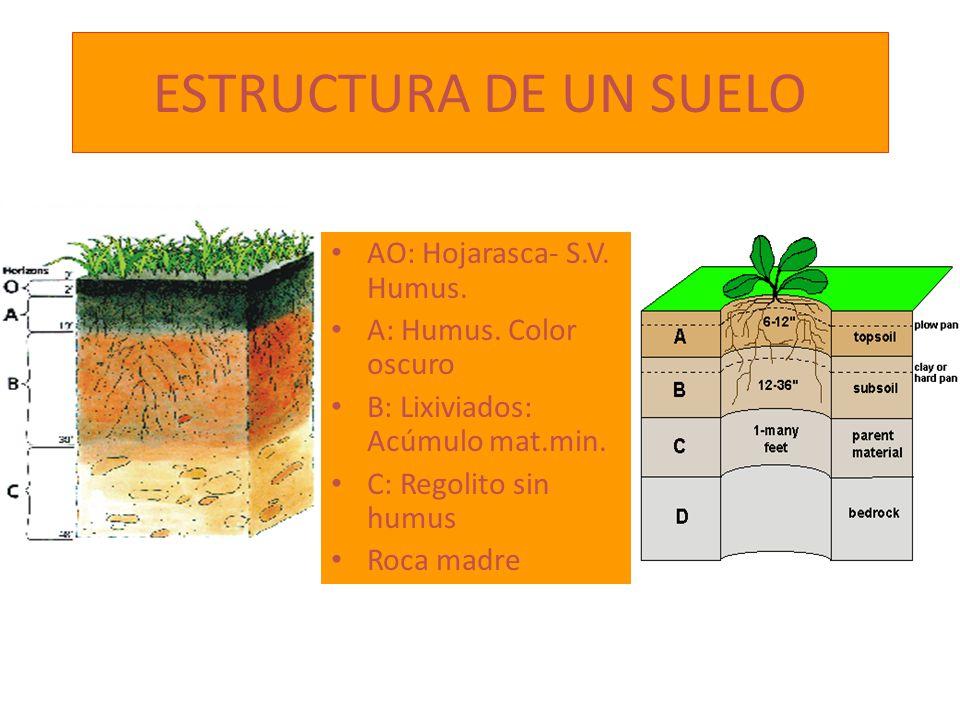ESTRUCTURA DE UN SUELO AO: Hojarasca- S.V. Humus. A: Humus. Color oscuro B: Lixiviados: Acúmulo mat.min. C: Regolito sin humus Roca madre