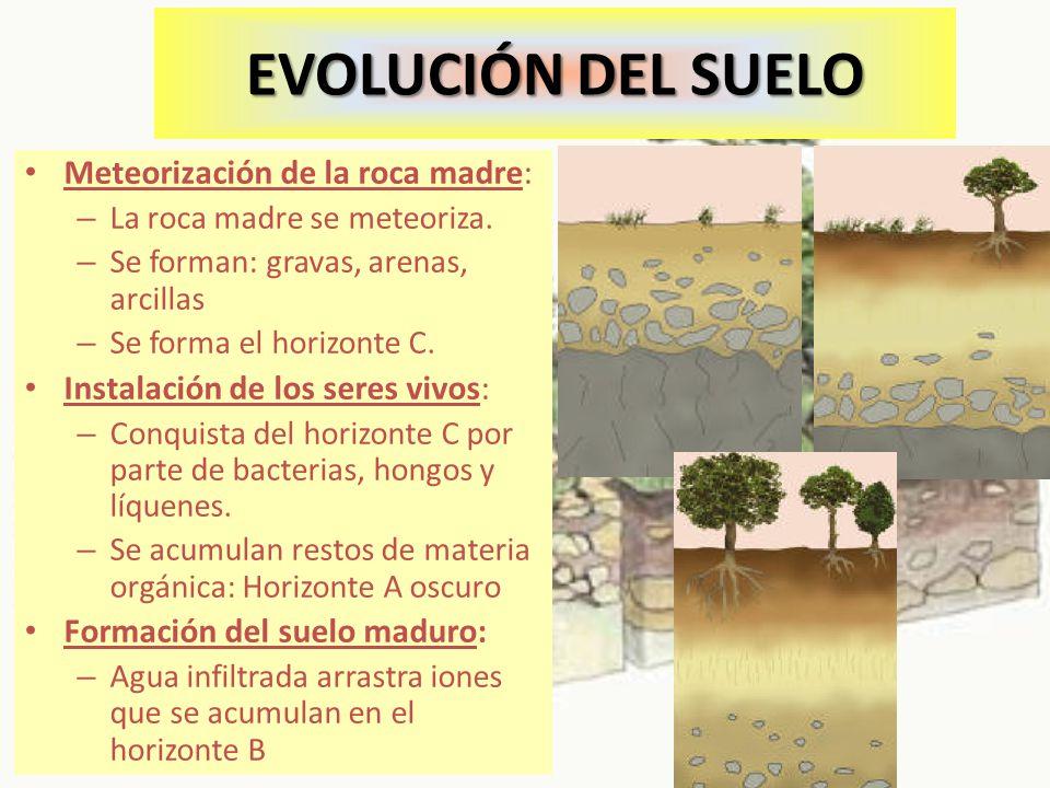 EVOLUCIÓN DEL SUELO Meteorización de la roca madre: – La roca madre se meteoriza. – Se forman: gravas, arenas, arcillas – Se forma el horizonte C. Ins