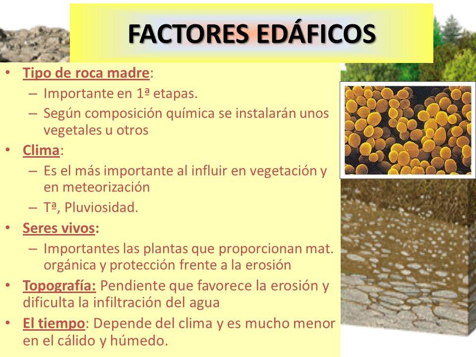FACTORES EDÁFICOS Tipo de roca madre: – Importante en 1ª etapas. – Según composición química se instalarán unos vegetales u otros Clima: – Es el más i