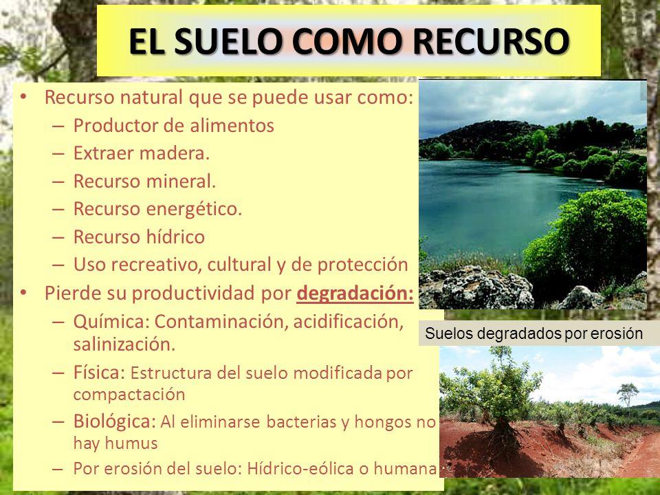 EL SUELO COMO RECURSO Recurso natural que se puede usar como: – Productor de alimentos – Extraer madera. – Recurso mineral. – Recurso energético. – Re