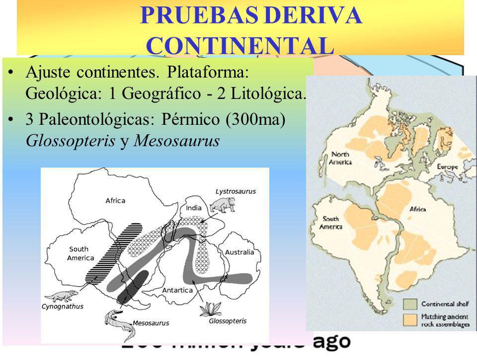 Ajuste continentes. Plataforma: Geológica: 1 Geográfico - 2 Litológica. 3 Paleontológicas: Pérmico (300ma) Glossopteris y Mesosaurus PRUEBAS DERIVA CO