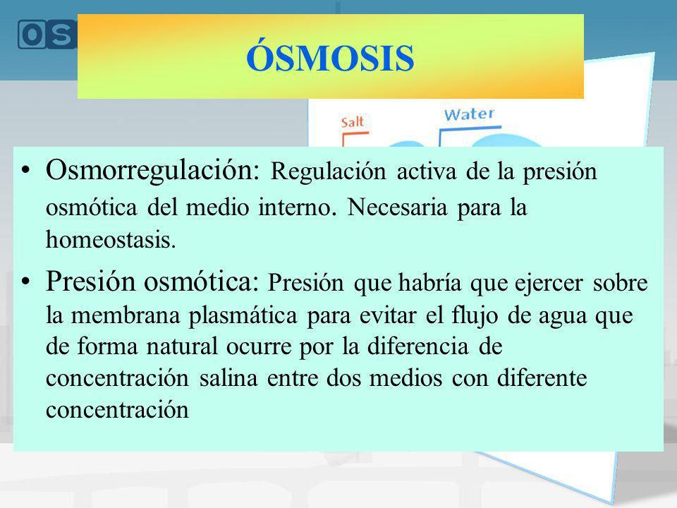Osmorregulación: Regulación activa de la presión osmótica del medio interno. Necesaria para la homeostasis. Presión osmótica: Presión que habría que e