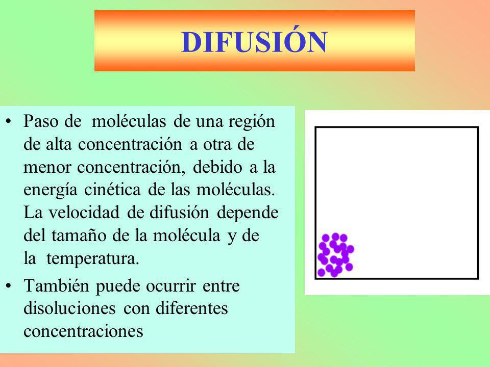 DIFUSIÓN Paso de moléculas de una región de alta concentración a otra de menor concentración, debido a la energía cinética de las moléculas. La veloci