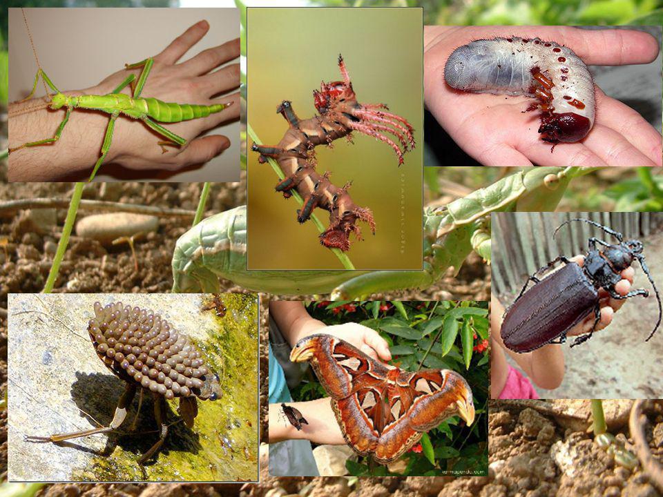 - Cl Reptiles: piel cubierta de escamas.Amniotas -Cl.