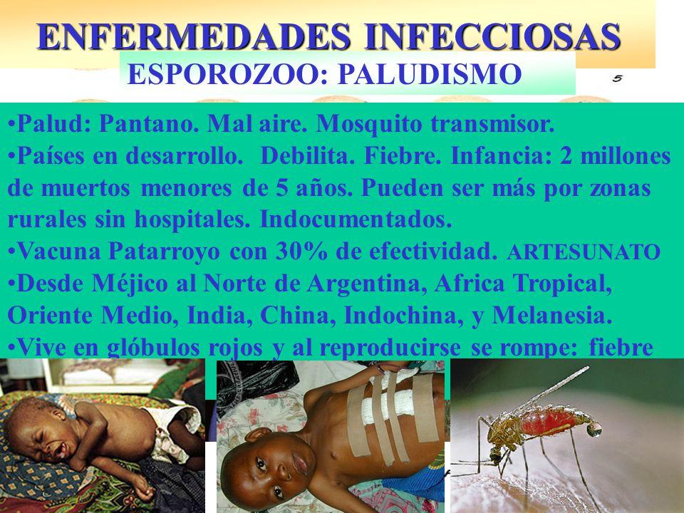 ENFERMEDADES INFECCIOSAS ESPOROZOO: PALUDISMO Esplanomegalia Palud: Pantano.