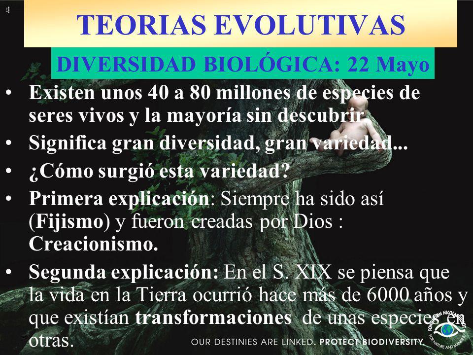 TEORIAS EVOLUTIVAS Existen unos 40 a 80 millones de especies de seres vivos y la mayoría sin descubrir.