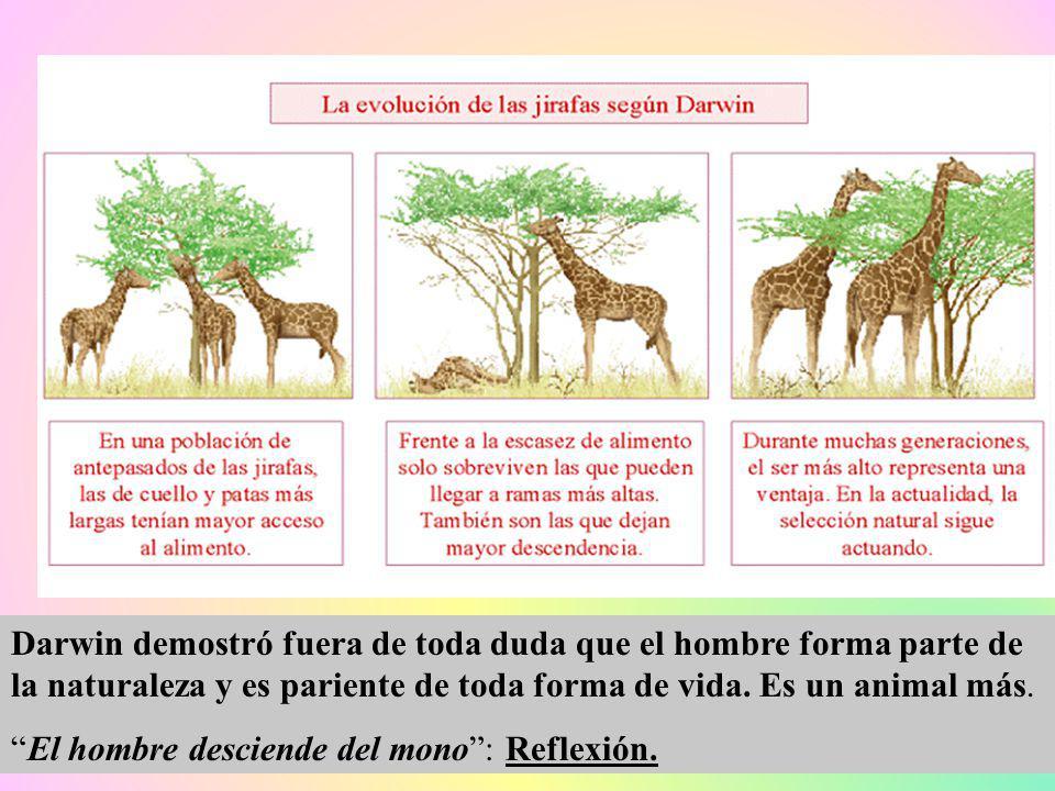Darwin demostró fuera de toda duda que el hombre forma parte de la naturaleza y es pariente de toda forma de vida. Es un animal más. El hombre descien