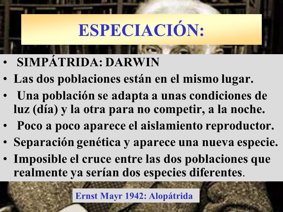 SIMPÁTRIDA: DARWIN Las dos poblaciones están en el mismo lugar. Una población se adapta a unas condiciones de luz (día) y la otra para no competir, a