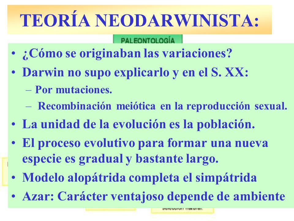 ¿Cómo se originaban las variaciones? Darwin no supo explicarlo y en el S. XX: –Por mutaciones. – Recombinación meiótica en la reproducción sexual. La