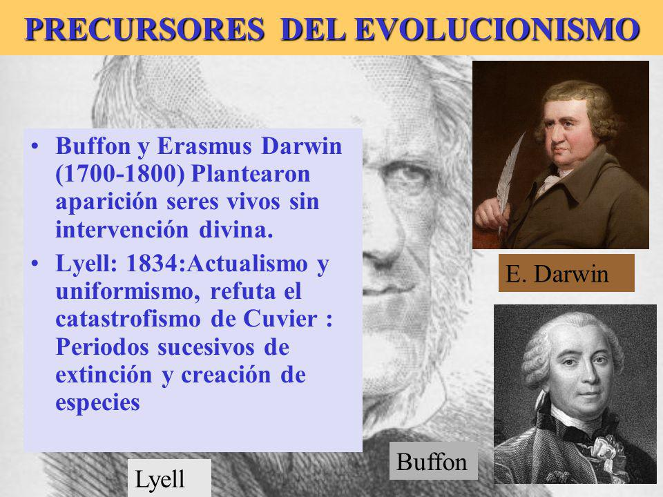 Buffon PRECURSORES DEL EVOLUCIONISMO Buffon y Erasmus Darwin (1700-1800) Plantearon aparición seres vivos sin intervención divina. Lyell: 1834:Actuali