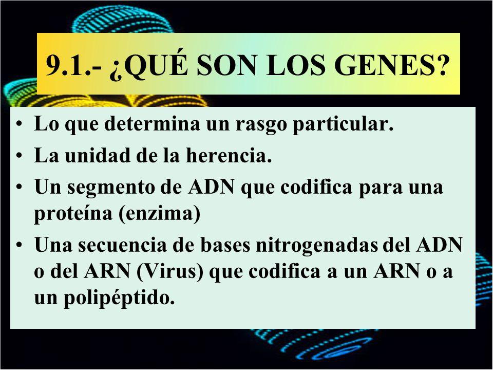 9.1.- ¿QUÉ SON LOS GENES? Lo que determina un rasgo particular. La unidad de la herencia. Un segmento de ADN que codifica para una proteína (enzima) U