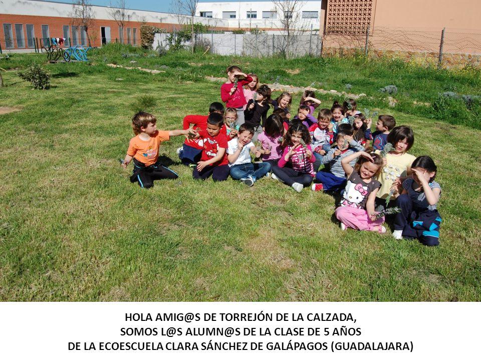 HOLA AMIG@S DE TORREJÓN DE LA CALZADA, SOMOS L@S ALUMN@S DE LA CLASE DE 5 AÑOS DE LA ECOESCUELA CLARA SÁNCHEZ DE GALÁPAGOS (GUADALAJARA)
