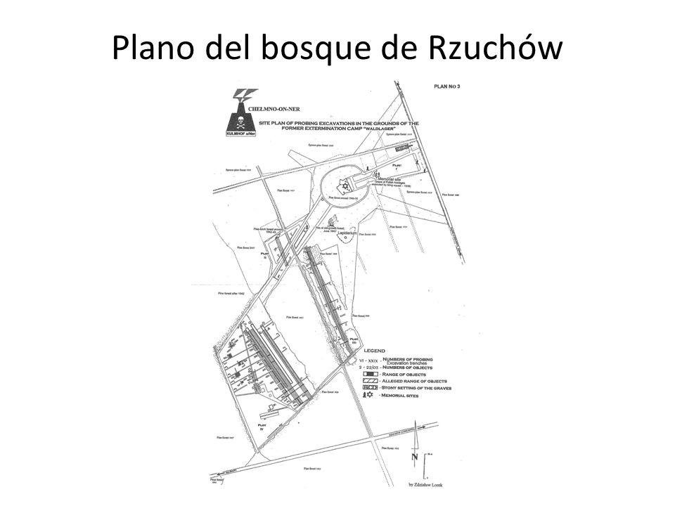 Plano del bosque de Rzuchów
