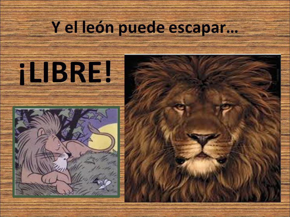 Y el león puede escapar… ¡LIBRE!