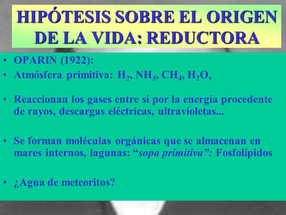 OPARIN (1922): Atmósfera primitiva: H 2, NH 3, CH 4, H 2 O v Reaccionan los gases entre sí por la energía procedente de rayos, descargas eléctricas, u